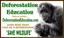 Deforestation Education - World Orangutan Events - World Orangutan Day - International Orangutan Day - #OrangutanDay