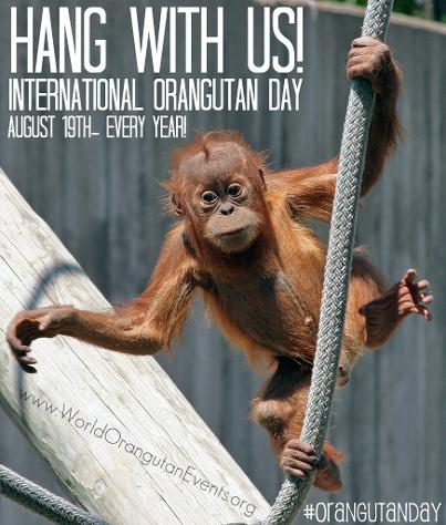 Orangutan Day- International Orangutan Day- World Orangutan Day - August 19th