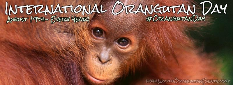 Image result for images world orangutan day