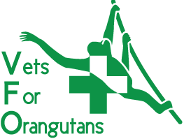 Vets 4 Orangutans - World Orangutan Events