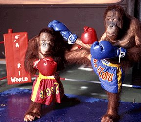 Apes Used In Entertainment - World Orangutan Day - International Orangutan Day - Orangutan Caring Week - The crisis facing apes