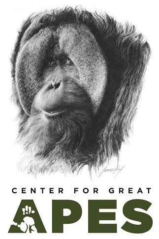 Center For Great Apes - World Orangutan Events